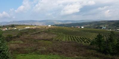 wijnroute kosovo