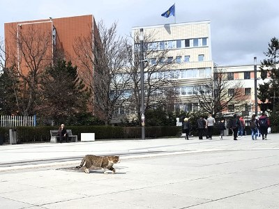 centrum pristina met kat